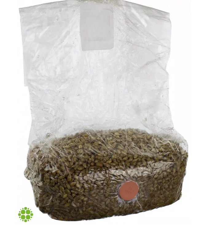 Spawn Bags- A Best Way To Save Your Mushroom